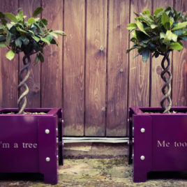 'I'm a tree… Me too' Doorstep Planters