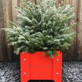 'It's Christmas' Festive Planter